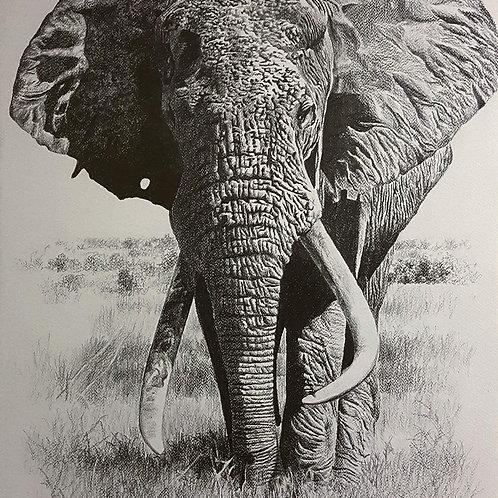 Sketch of Iconic Tsavo Tusker : WS-1