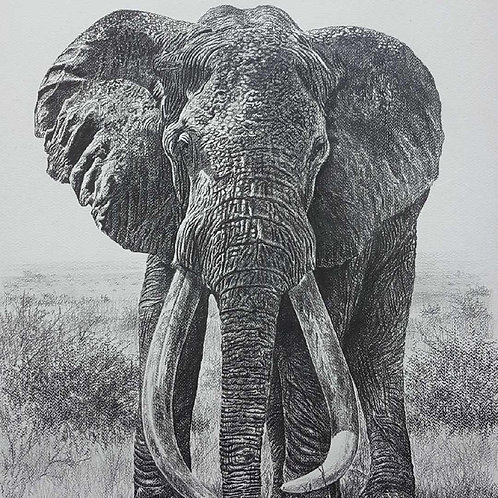 Sketch of Iconic Tsavo Tusker : SA-1