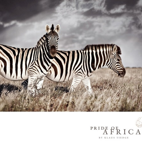 African Greeting Card - Zebras