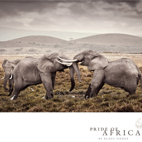 African Greeting Card - Elephants Sparring