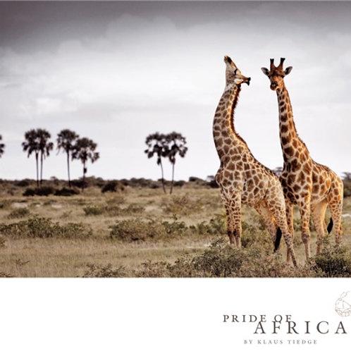 African Greeting Card - Giraffes