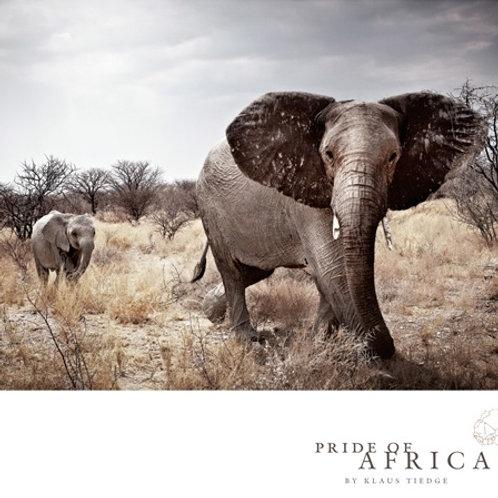 African Greeting Card - Elephant Standoff