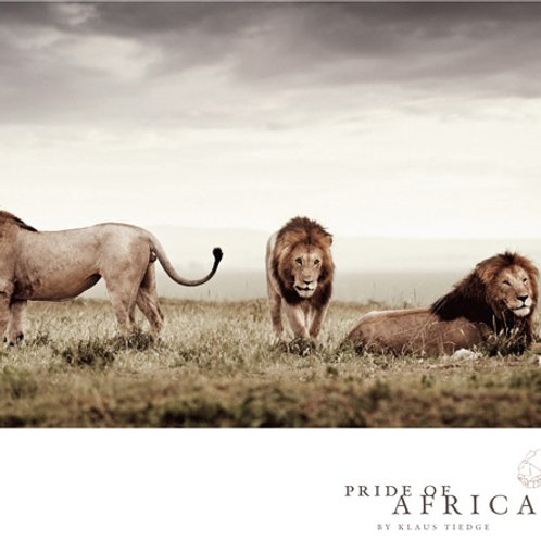 African Greeting Card - Lion Brothers
