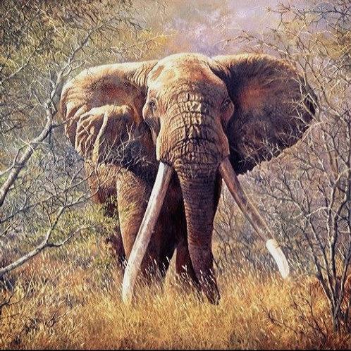 Canvas Print of Iconic Tsavo Tusker : KE-1