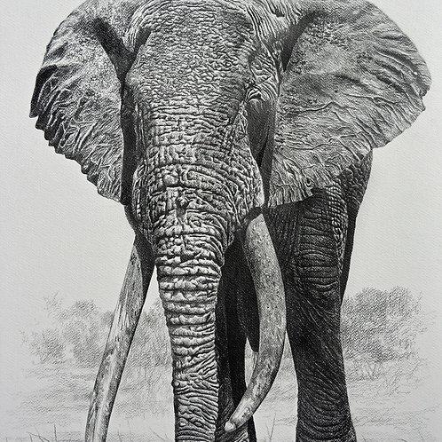 Sketch of Iconic Tsavo Tusker : LU-1
