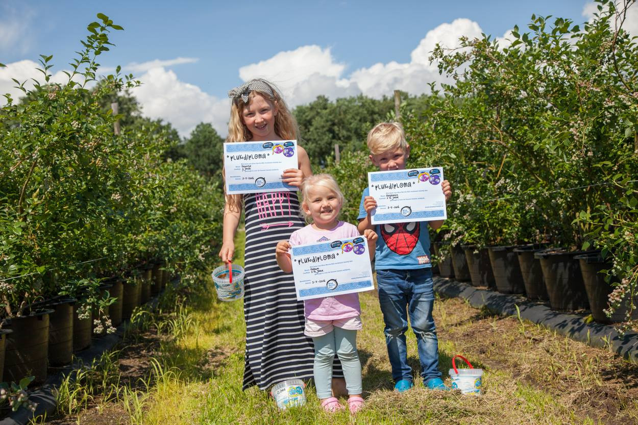 Blue Berrie Hill plukdiploma's