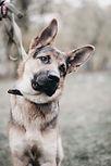Securipro I Bewaking met hond.jpg
