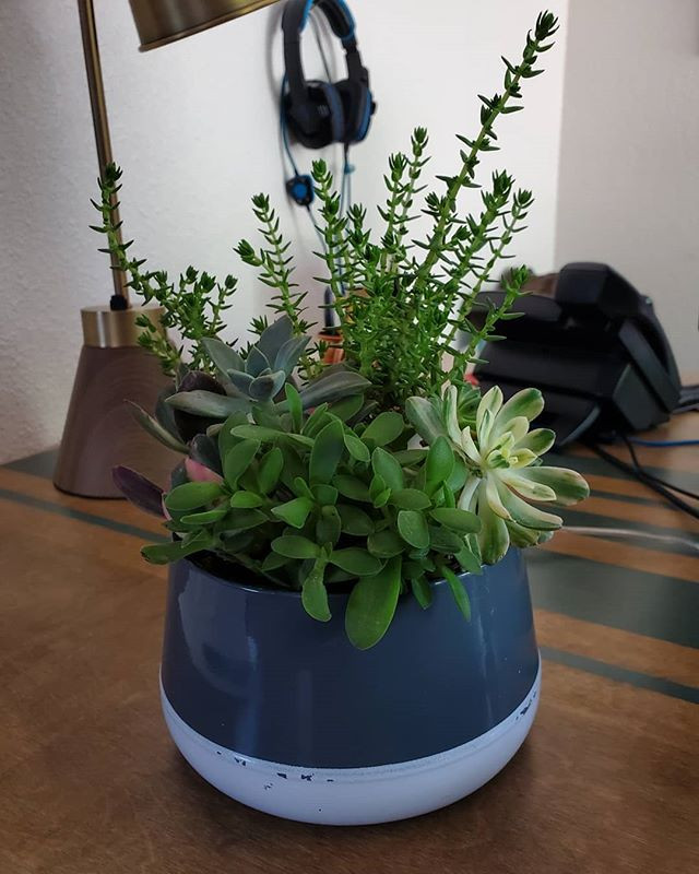 succulent plant arrangement in office