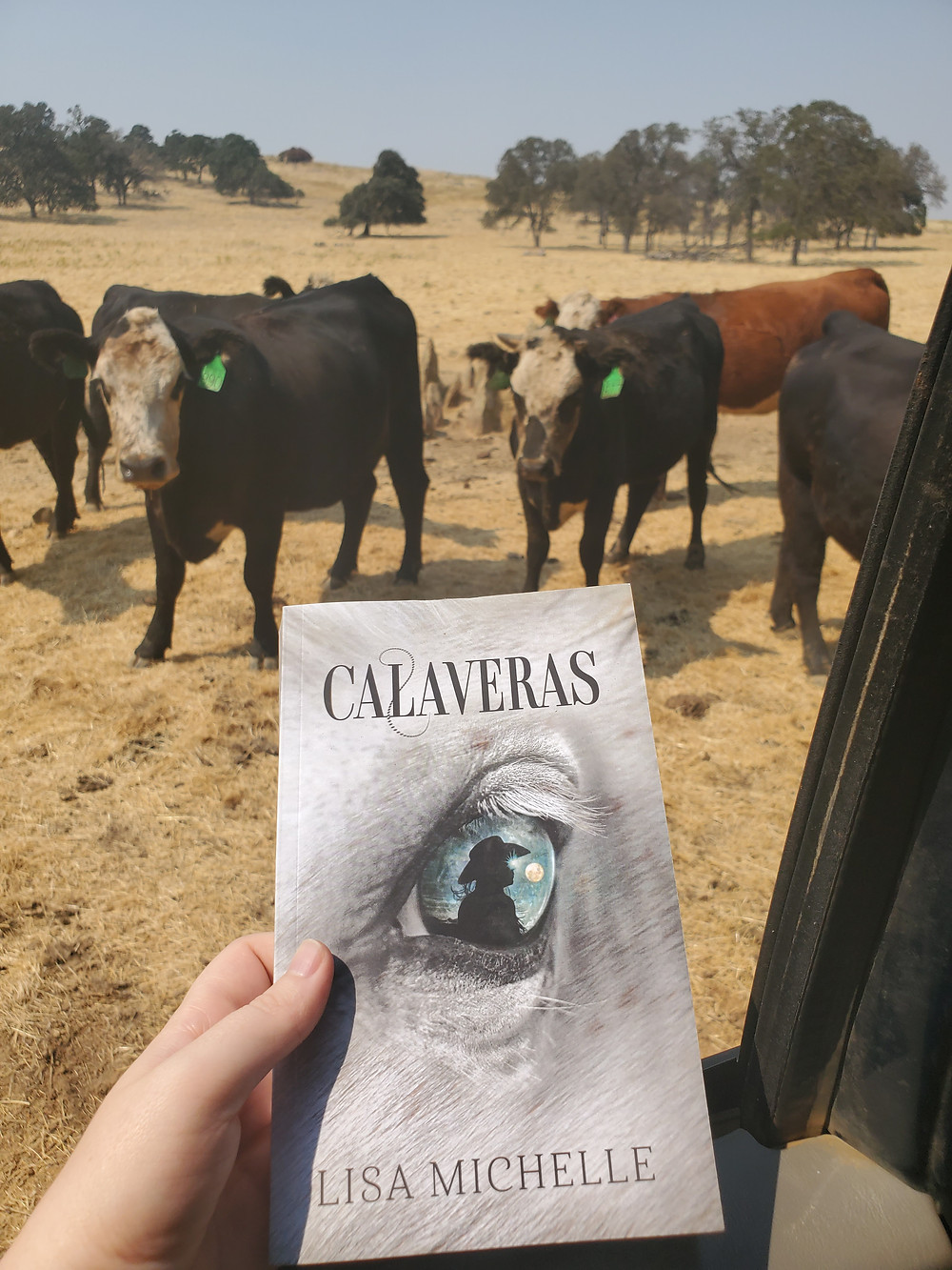 Cattle gather around new novel Calaveras by author Lisa Michelle