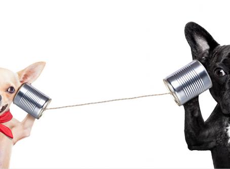 Nunca dejes de observar y de escuchar a tu consumidor