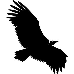 vulture-vector-clipart_8586