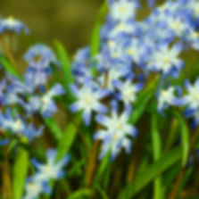 spring-garden-sized.jpg