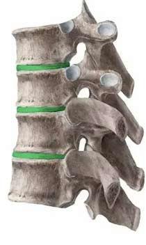 infinite health vertebrae side diagram.j
