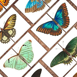 Butterfly Symmetry Square IG 2021.jpg