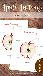 Apple Anatomy.png