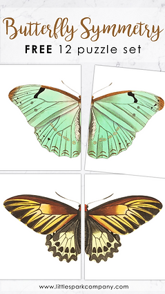 Butterfly Symmetry Puzzles.png