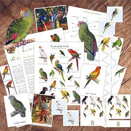 Parrot Bundle Square for Website.jpg