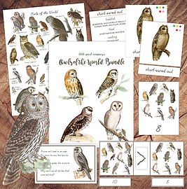 Owls of the World Square Wood.png