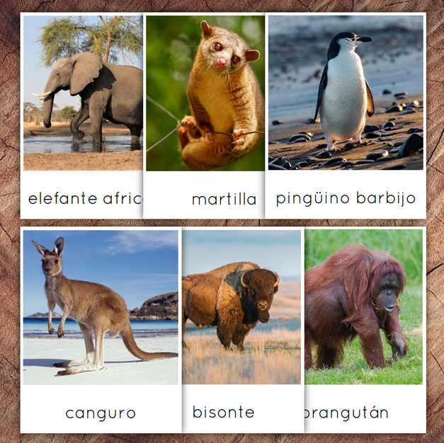Spanish World Animals Bundle