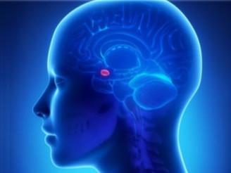 Amigdala Nedir? Amigdala Bozukluğu Belirtileri Nelerdir?