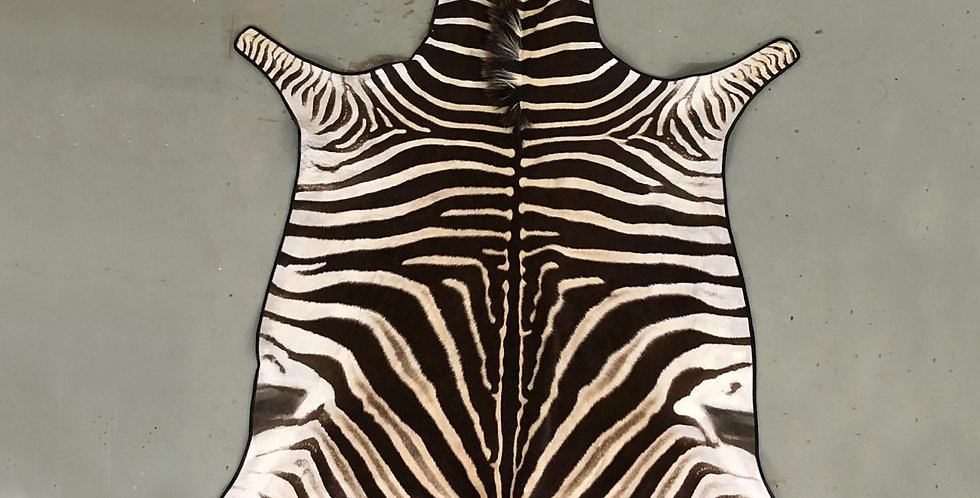 South African Zebra Hide 16