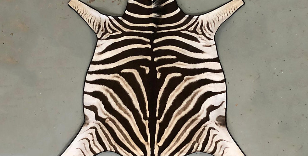 South African Zebra Hide 1
