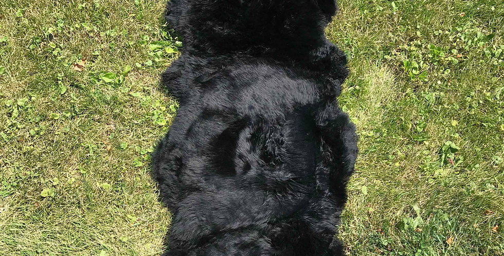 Australian Sheepskin Double Black 2'x6' $95