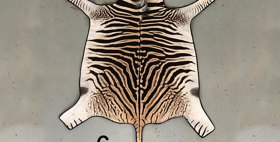 South African Zebra Hide 6 $1290