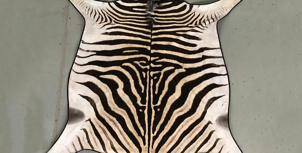 South African Zebra Hide 2