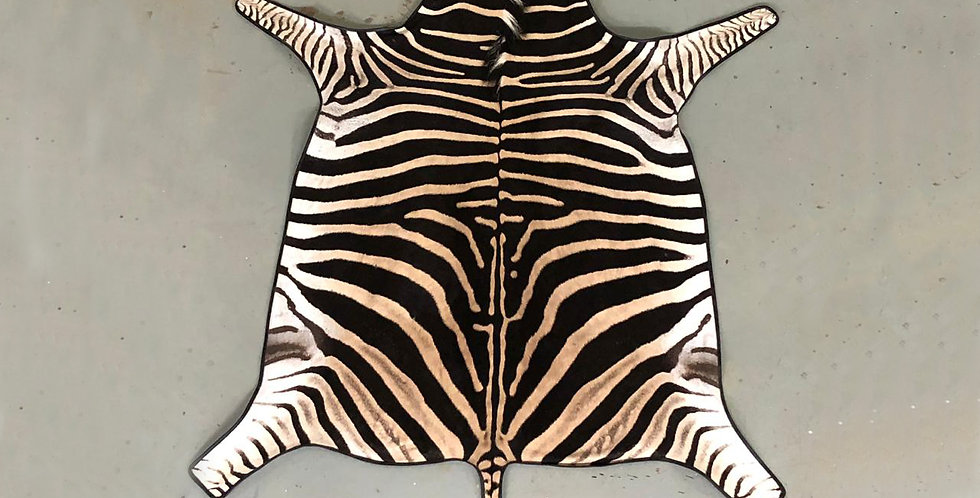 South African Zebra Hide 7