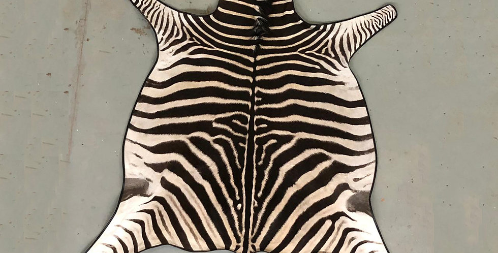 South African Zebra Hide 3