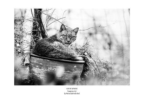 Cat of Athens