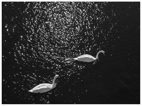 Swans and the universe (A3)