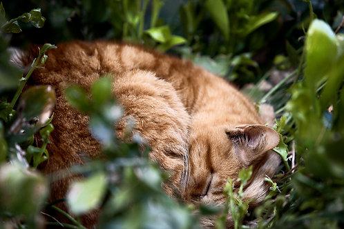 Sleeping (A3)