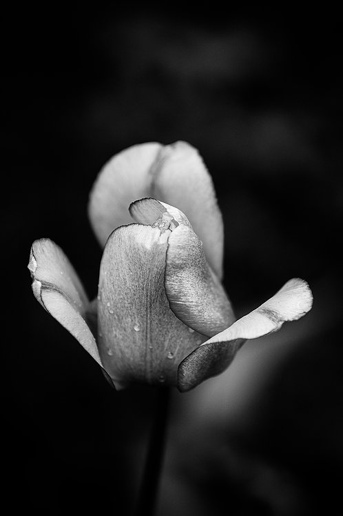 This is how I opened up - B/W