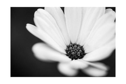 Flower B/W (A3)
