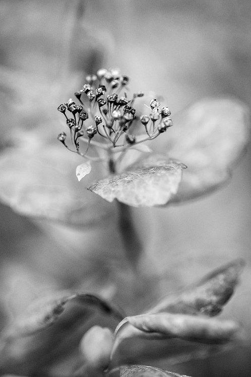 A Floral Secret