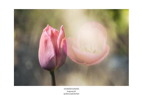 A FLOWER'S LONGING