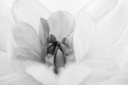 White Flower (A3)