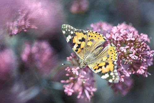 Butterfly I (A3)