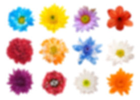 Big Selection Of Various Flowers Isolated On White Background.jpg