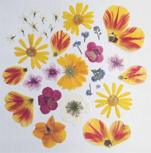 flowers_jpg.jpg