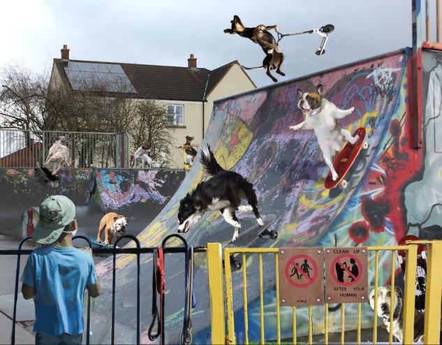 Helen Andrews Lockdown Skatepark Dogs.jp