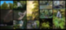 Whirinaki montage.jpg