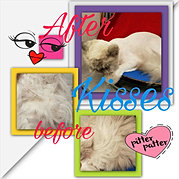 Grooms by kat cat grooming in kennewick wa cat grooming in prosser wa kitty solutioingenieria Image collections