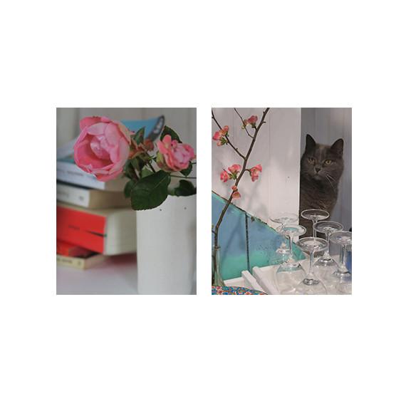 roses de janvier