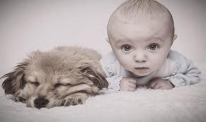 Le chien et l'arrivée du bébé