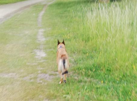 Courir avec son chien...un plaisir partagé ?