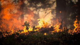 Worried about Wildland Fires?