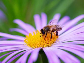 Honey Mask & Scrub